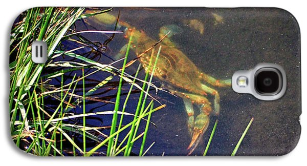 Galaxy S4 Case featuring the photograph Maryland Blue Crab Lurking In An Assateague Marsh by Bill Swartwout Fine Art Photography