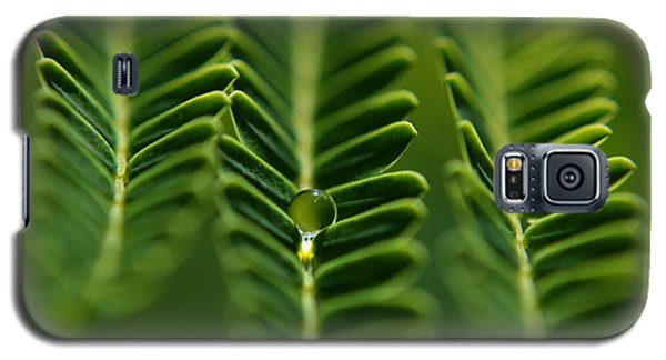Galaxy S5 Case featuring the photograph  A Green Drop by Michelle Meenawong