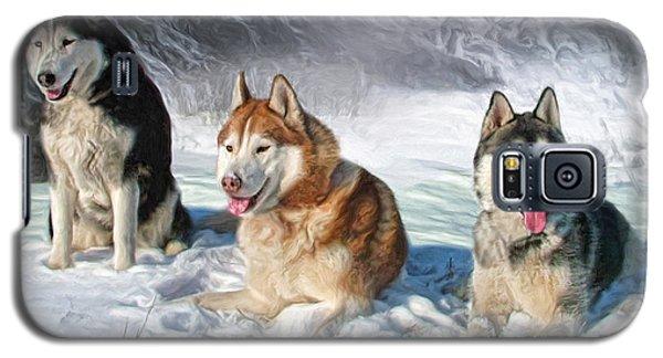 Alaskan Malamute Galaxy S5 Case
