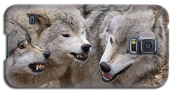Galaxy S5 Case featuring the photograph  Alpha Displeasure 2 by Wolves Only