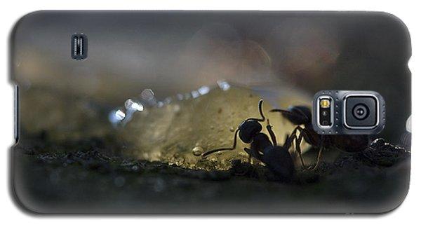 Ant Silhouette  Galaxy S5 Case by Odon Czintos