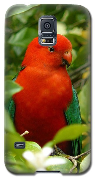 Galaxy S5 Case featuring the photograph  Aussie King Parrot by Margaret Stockdale