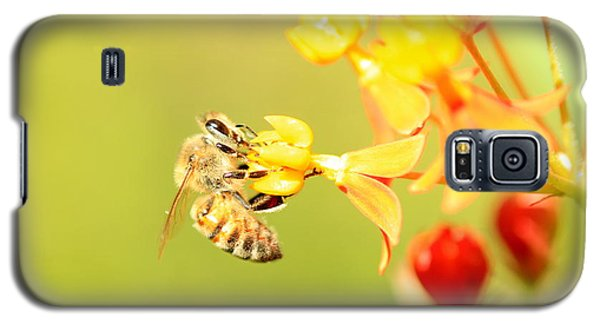 Galaxy S5 Case featuring the photograph  Bee On Milkweed by Greg Allore