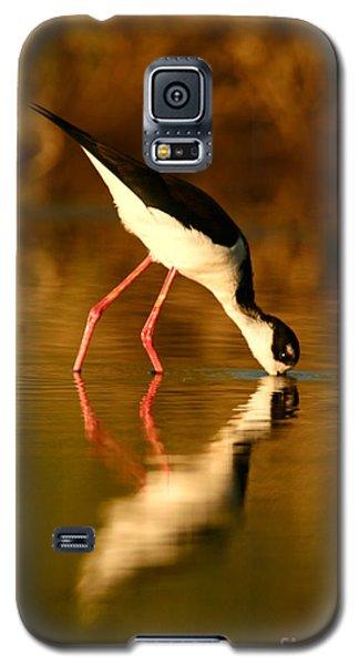 Stilt In Gold Galaxy S5 Case
