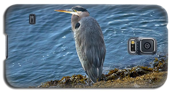 Galaxy S5 Case featuring the photograph  Blue Heron On A Rock by Eti Reid
