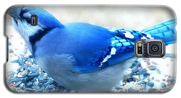 Bright Blue Jay  Galaxy S5 Case