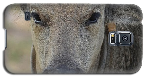 Galaxy S5 Case featuring the photograph  Buffalo by Michelle Meenawong