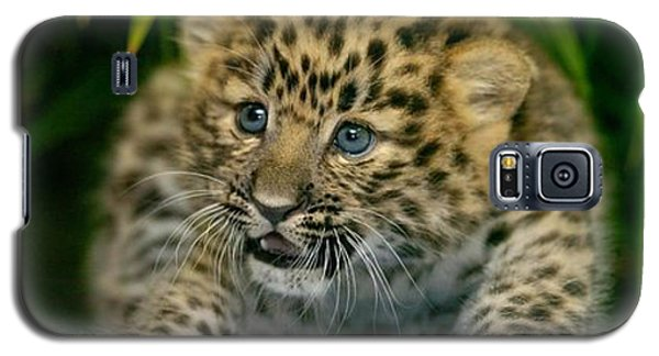 Cheetah Cub Im Gonna Getcha Galaxy S5 Case