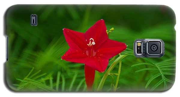 Galaxy S5 Case featuring the photograph  Cypressvine Morning Glory by Blair Wainman