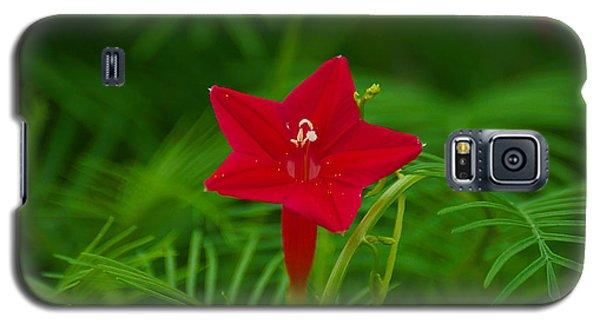 Cypressvine Morning Glory Galaxy S5 Case by Blair Wainman