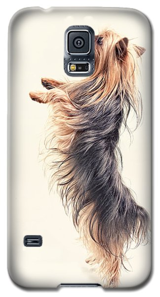 Dancing Yorkshire Terrier Galaxy S5 Case by Susan Stone