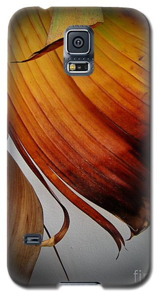 Dried Leaves Galaxy S5 Case by Michelle Meenawong