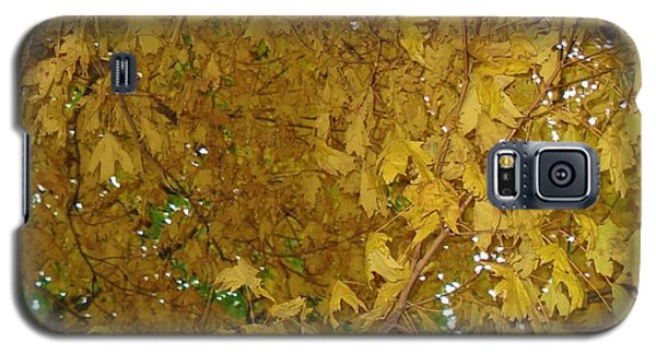 Galaxy S5 Case featuring the photograph  Fall Amur Maple  by J L Zarek