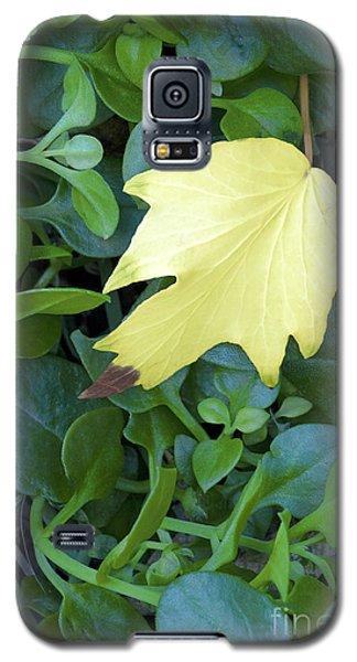 Fallen Yellow Leaf Galaxy S5 Case