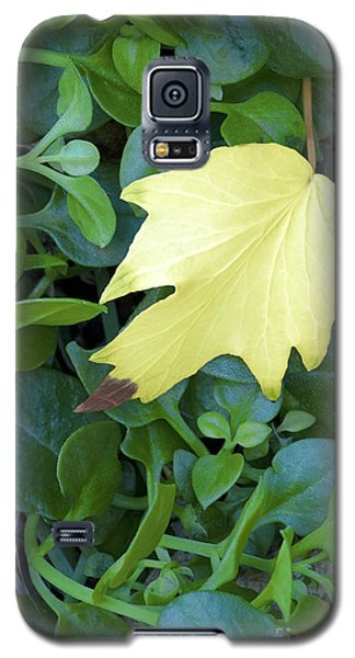 Fallen Yellow Leaf Galaxy S5 Case