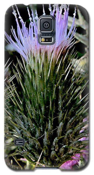 Glowing Purple Thisle Flower Galaxy S5 Case
