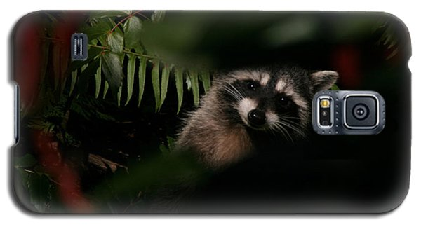 Galaxy S5 Case featuring the photograph  I Can See You  Mr. Raccoon by Kym Backland