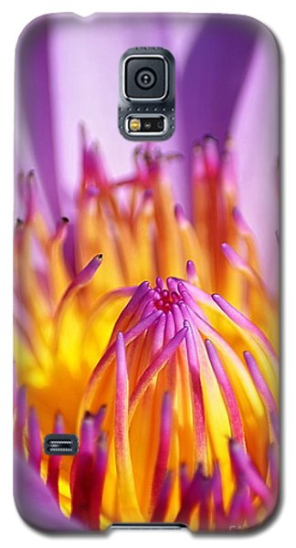 Just Purple Galaxy S5 Case