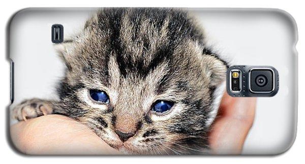 Kitten In A Hand Galaxy S5 Case