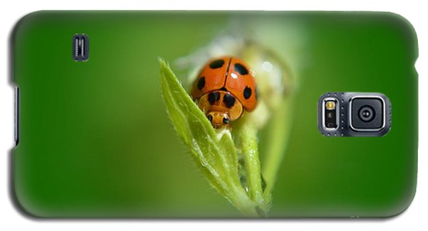 Galaxy S5 Case featuring the photograph  Ladybug by Michelle Meenawong