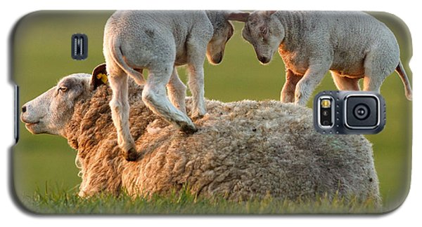 Leap Sheeping Lambs Galaxy S5 Case by Roeselien Raimond