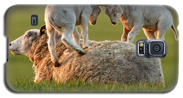Leap Sheeping Lambs Galaxy S5 Case