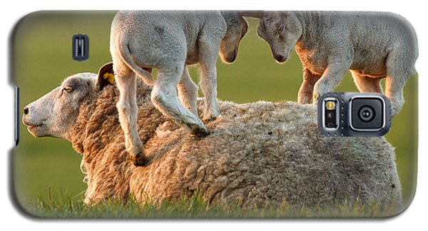 Sheep Galaxy S5 Case -  Leap Sheeping Lambs by Roeselien Raimond