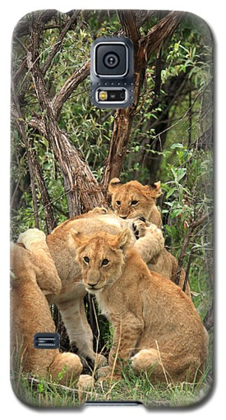 Masai Mara Lion Cubs Galaxy S5 Case