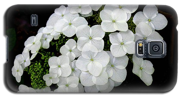 Oak Leaf Hydrangea Galaxy S5 Case