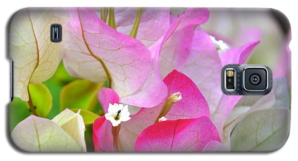 Pink  Bougainvillea ...with A Friend Galaxy S5 Case