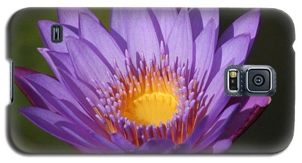 Purple Water Lily Galaxy S5 Case by Karen Silvestri