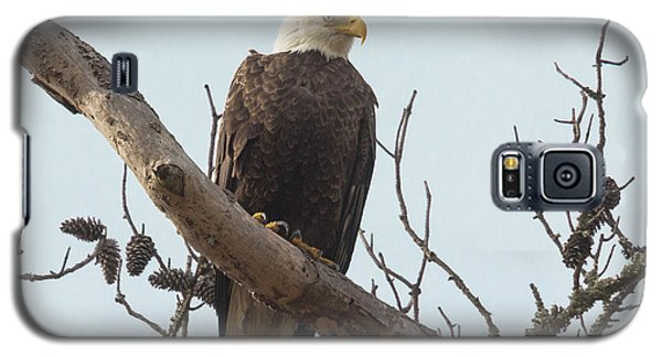 Resting Bald Eagle Galaxy S5 Case