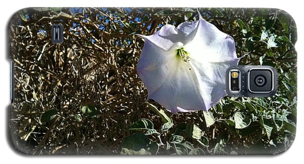 Galaxy S5 Case featuring the photograph  Sacred Datura by Angela J Wright