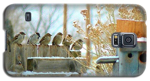 7 Winter Sparrows Galaxy S5 Case