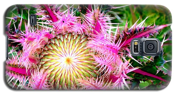 Galaxy S5 Case featuring the photograph  Texas Thistles by Antonia Citrino