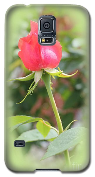 The Heart Of The Rose Galaxy S5 Case by Judy Palkimas