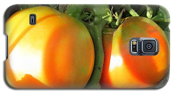 Galaxy S5 Case featuring the photograph  Vine Ripe Tomatoes by Tina M Wenger