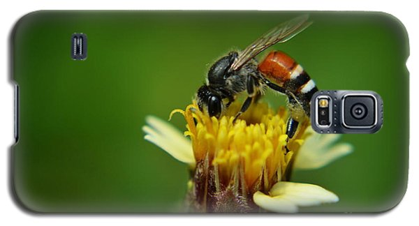 Working Bee Galaxy S5 Case by Michelle Meenawong