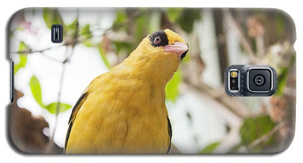 Yellow Songbird Galaxy S5 Case by Odon Czintos
