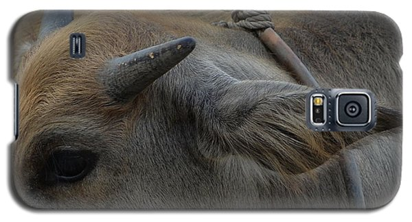 Galaxy S5 Case featuring the photograph  Young Buffalo by Michelle Meenawong