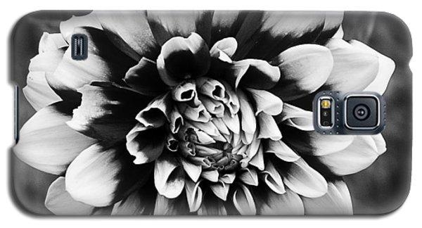 01 Lovely Dahlia Galaxy S5 Case