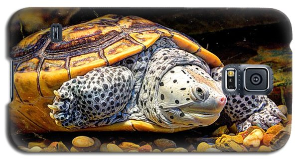 Sea Turtle Galaxy S5 Case by Savannah Gibbs