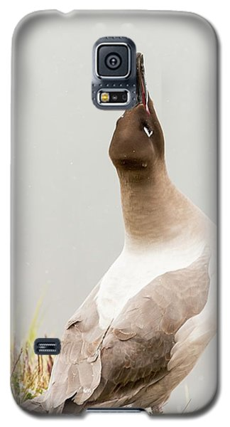 A Light Mantled Albatross Galaxy S5 Case