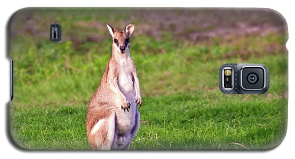 A Male Grey Kangaroos (macropus Galaxy S5 Case by Miva Stock