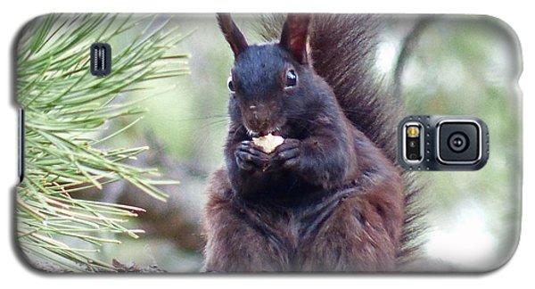 Aberts Squirrel Galaxy S5 Case