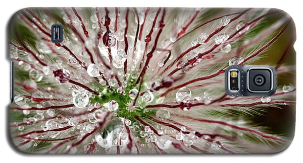 Abstract Macro Flower Head Galaxy S5 Case