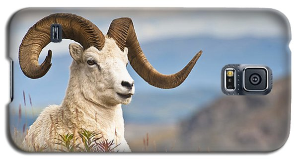 Adult Dall Sheep Ram Resting Galaxy S5 Case by Michael Jones