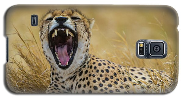 Cheetah Galaxy S5 Case - Africa Tanzania Cheetah (acinonyx by Ralph H. Bendjebar