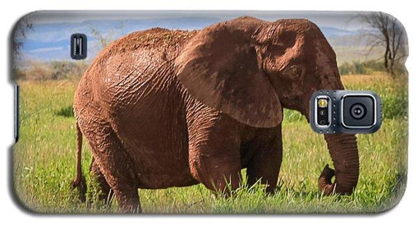 African Desert Elephant Galaxy S5 Case