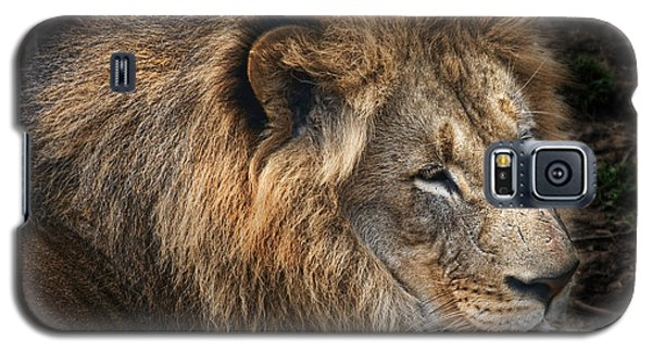 African Lion Galaxy S5 Case by Tom Mc Nemar